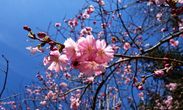 31 mars 1841 : Robert Schumann ressuscite le printemps !