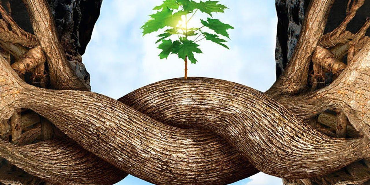 «L'Intelligence des arbres» : théories fumeuses, succès inquiétant