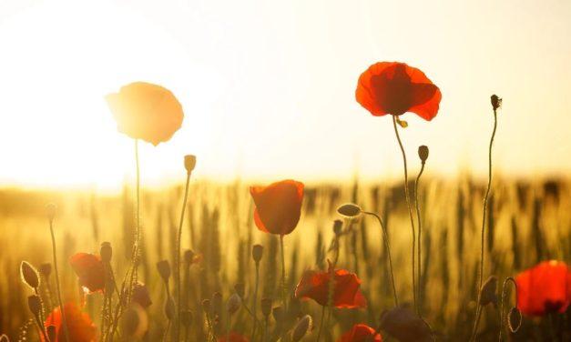 20 novembre 1889 : dites-le avec des petites fleurs