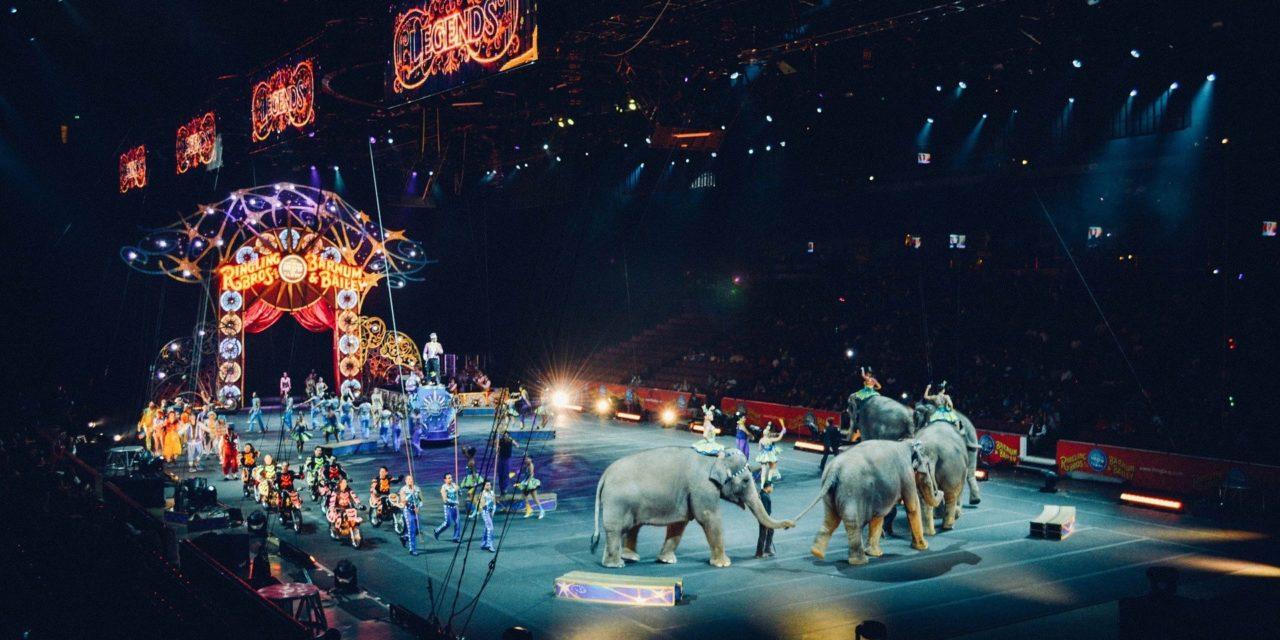 Animaux dans le cirque: faut-il se libérer de cet héritage?