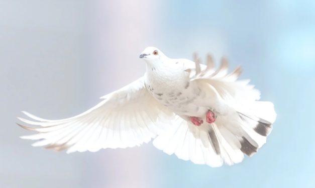 20 mars 1898 : la colombe expiatoire